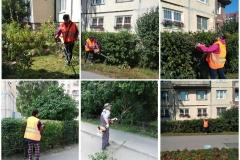 Уход за зелеными насаждениями